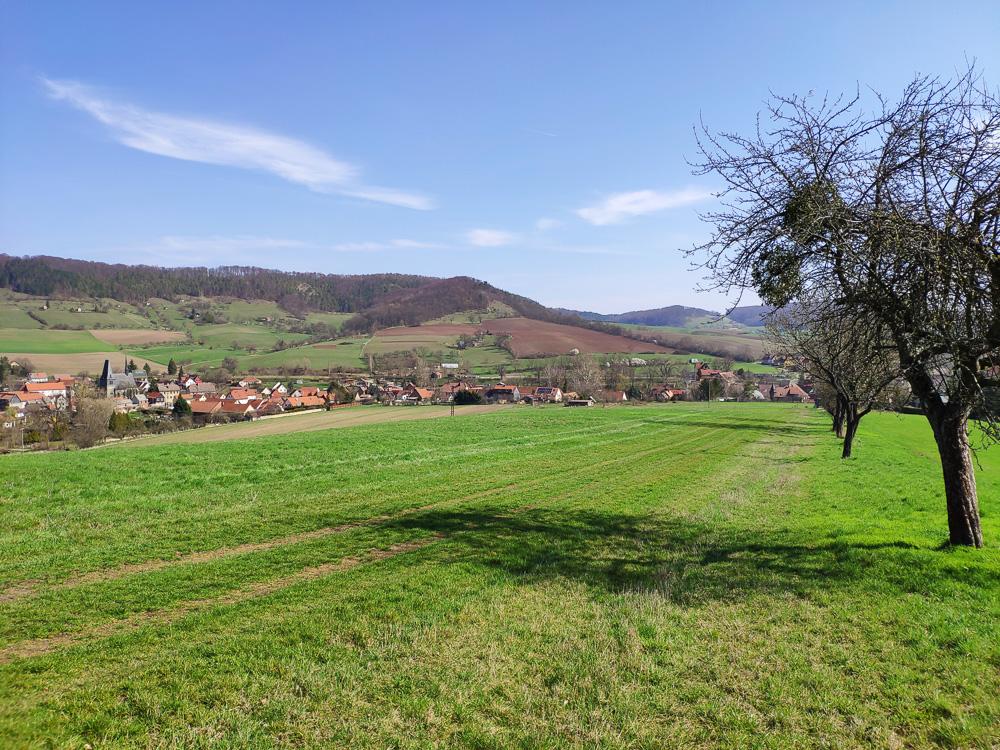 Entlang der Obstbäume geht es auf einem Wiesenpfad bergauf. Im Hintergrund sieht man Graitsch, unseren Ausgangspunkt. Wanderung im Naturschutzgebiet Alter Gleisberg.