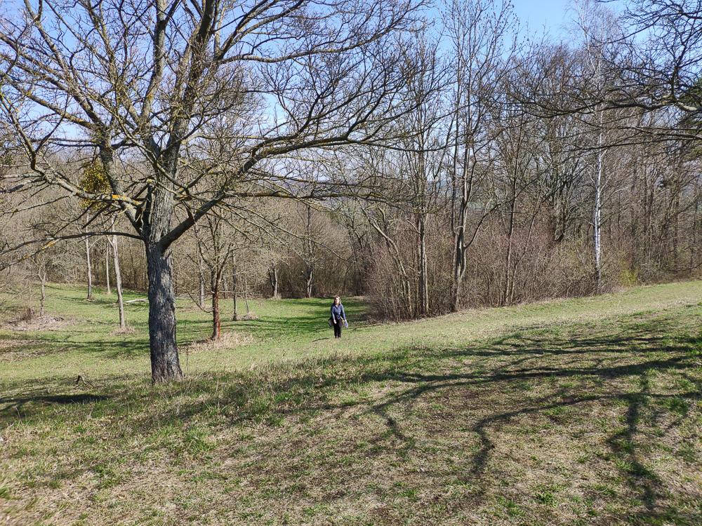 Kurz vor dem Gipfelplateau des Alten Gleisbergs lichtet sich der Wald