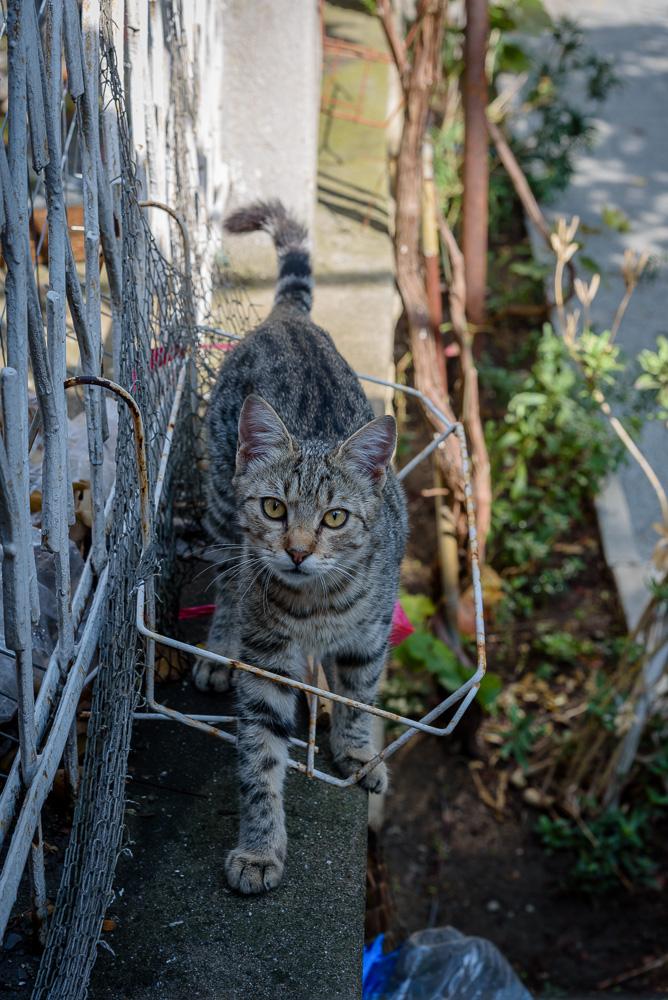 Tierischer Bewohner der Altstadt von Nessebar