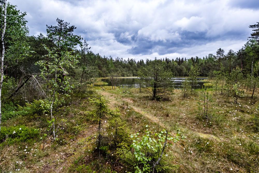 Blick auf ein Moor im Wald innerhalb des Nationalpark Žemaitija
