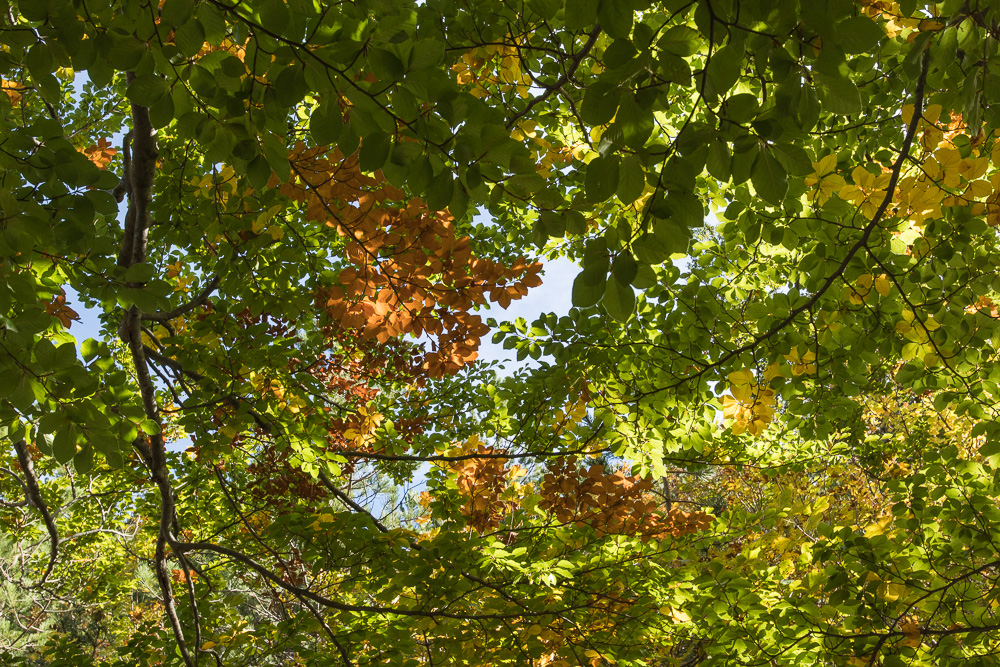 Herbst im Nationalpark Paklenica