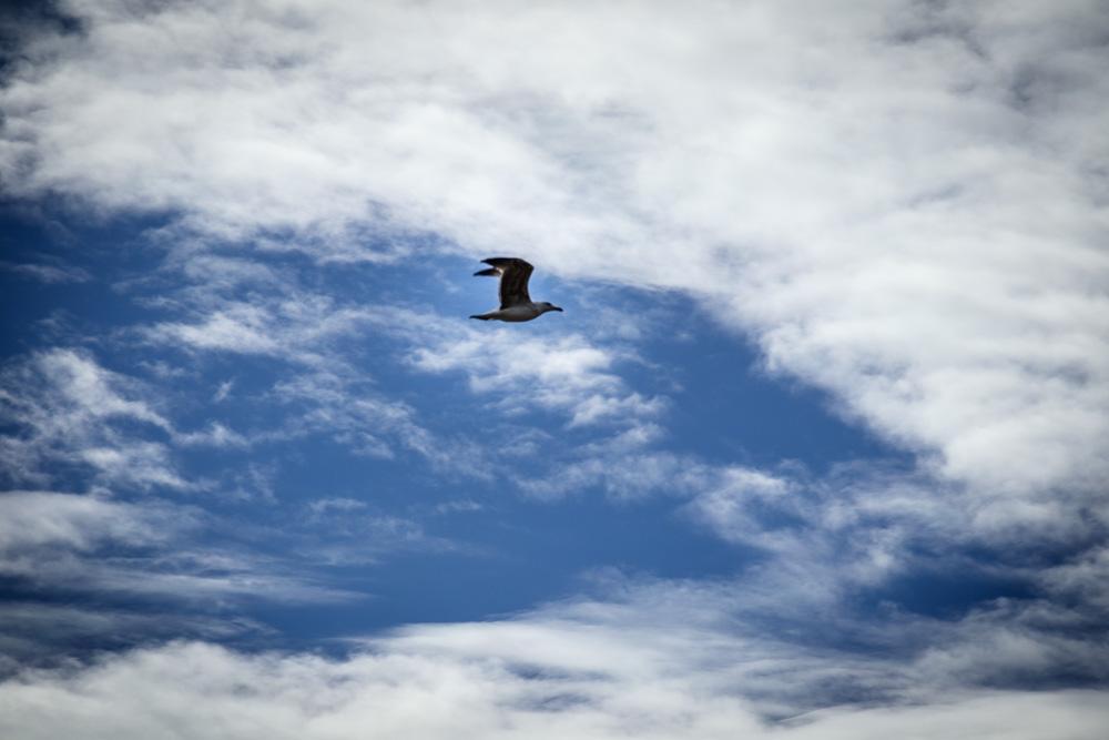 Doch sollte man aufgrund der vielen Vögel den Himmel stets im Blick behalten um unschönen Überraschungen zu entgehen